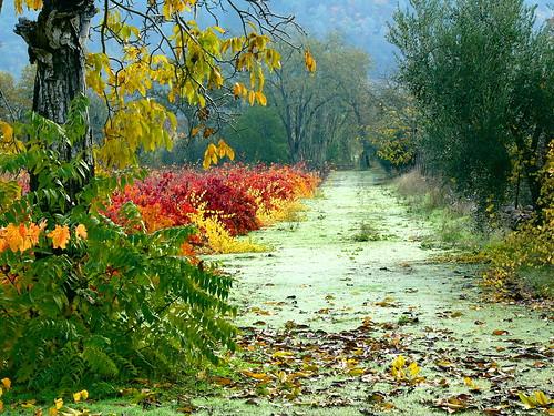 2004 autumn california calistoga dmcfz10 leaves leica lumix napavalley road trees view vines vineyard wine winery