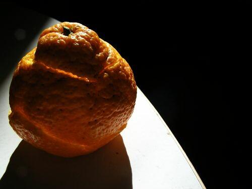 tangerine in sunlight
