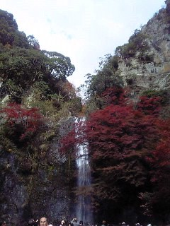 fall leaves at mino
