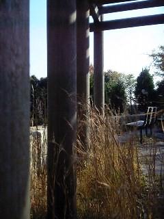 forgotten park