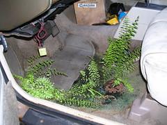 Buick Gardens (2004 - Nov - 19)