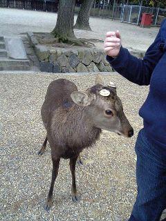 our friend at Nara deer park