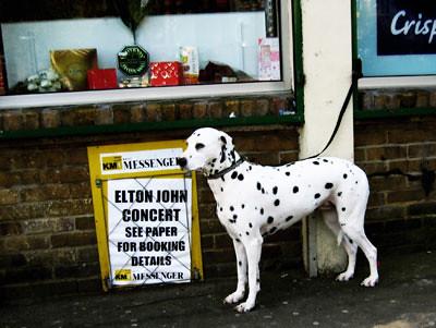 Elton John and dog