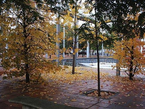arbres-tardor