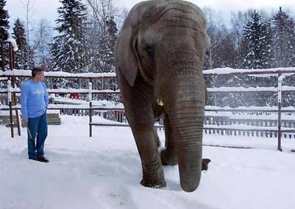 elephant_wideweb__430x305