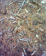 Woodland walj