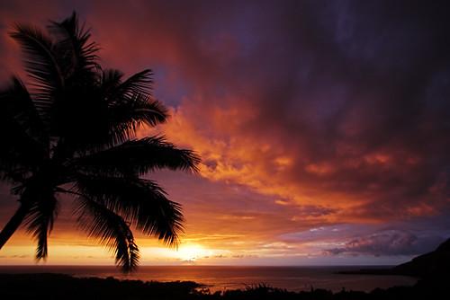 sunset color silhouette clouds hawaii bravo bigisland kona coconutpalm 10445