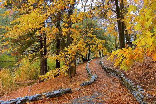 california mountains nature leaves landscape hiking fallcolors trail idyllwild sanjacinto lakefulmor sdosremedios stevendosremedios size2x3 lakefulmorestaterecreationarea wiredeye