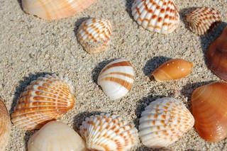Sea shells 1   by árticotropical