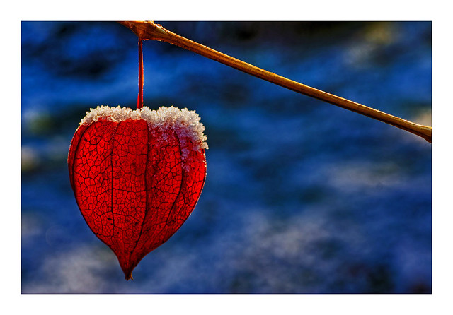 Gefrorenes Herz / Frozen Heart