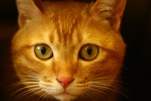 Cat-Key | by Enid Yu