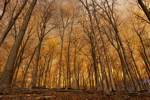 trees sunset gold iso100 golden stand 200mm standoftrees canoneos1dmarkii eos1dmarkii lens:maker=sigma gisteqphototrackr gisteqphototrackrgeotaggers sigma20mmexf18 flickr:user=morganm7777777 aperturepriorityae lens:focal_min=20 lens:focal_max=20 flickr:user=89016311n00