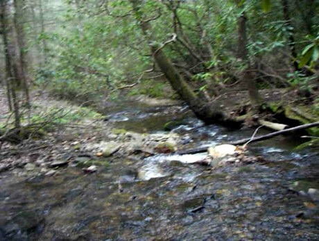 Wading In Avery Creek... on Vimeo