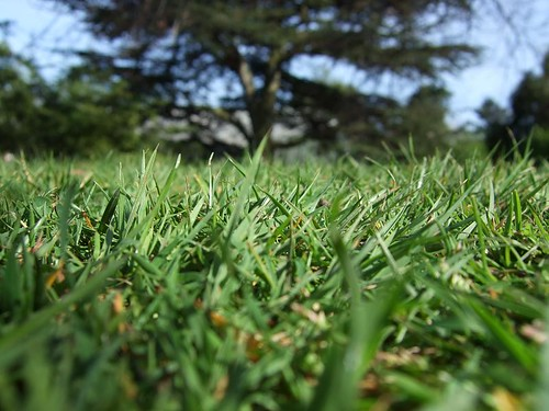 Grass, Royal Botanic Gardens | by ollyj