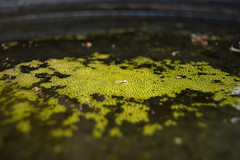 Algae | by alex_quinn
