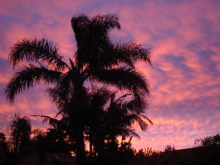 Palm tree against sunset sky | by Michael_Spencer