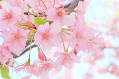 spring pink #2 | by noe**