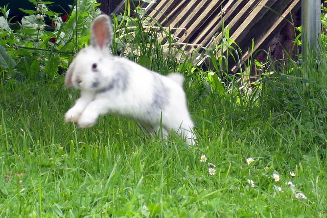 Bunny Binky