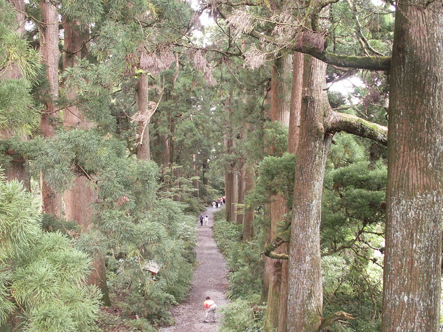 500 year old cedars