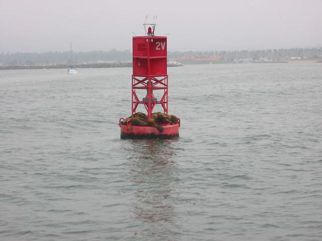 Harbor Buoy