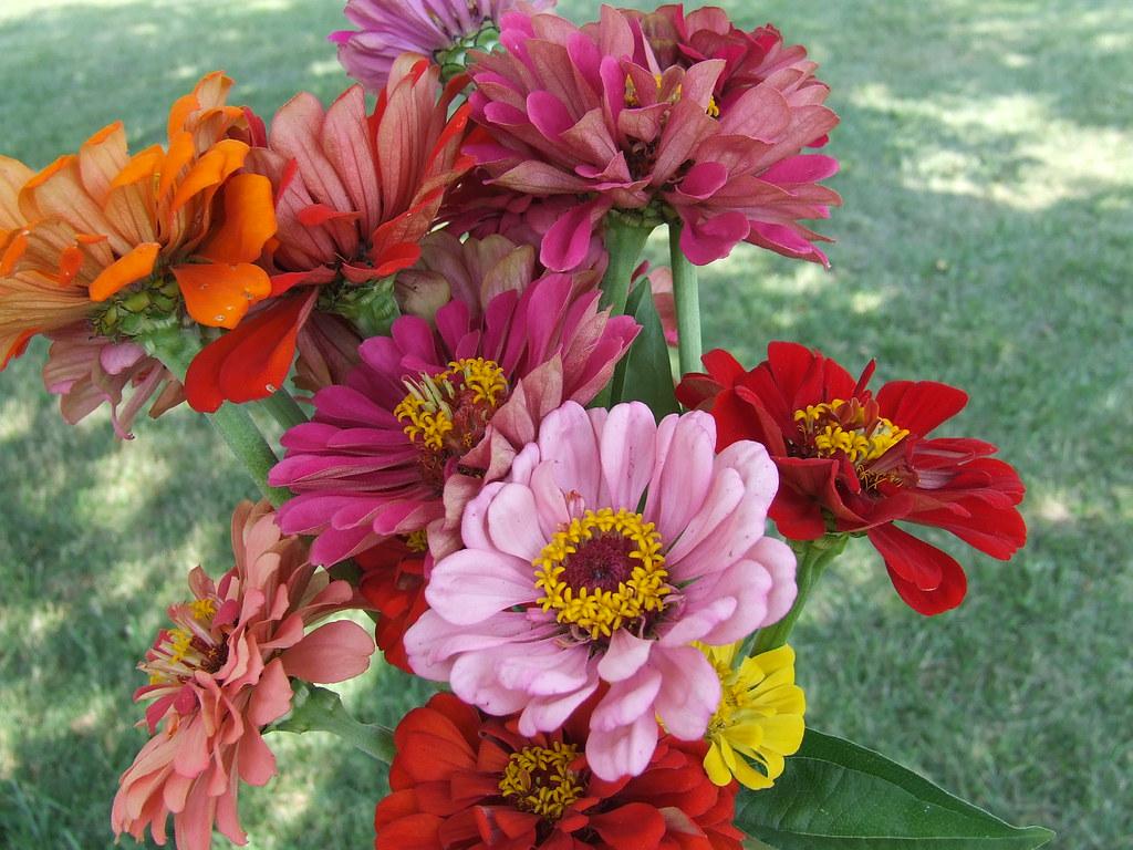 My Zinnia Bouquet