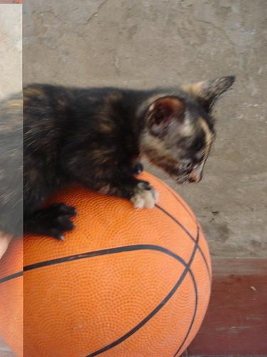 Cachorritos marmolada en pelota | by pccafaro