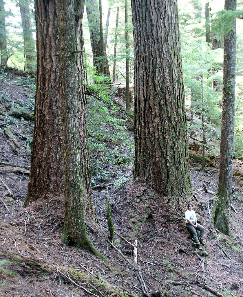 Old Growth Public Forest, Coos Bay BLM