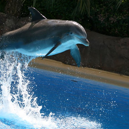 The Dolphin Habitat   by Cayusa