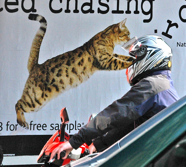 Motorcycle Cat Attack