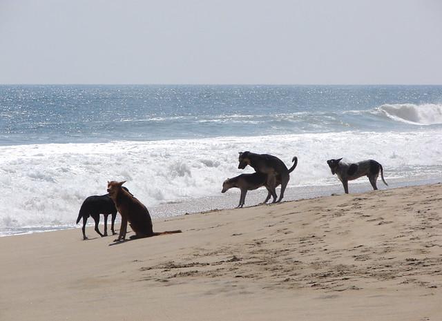 Photos of sex on the beach