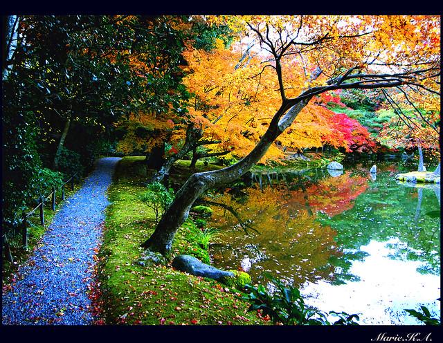 Autumn Road to Winter