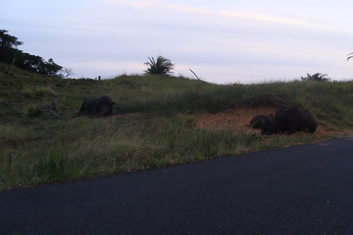 Kwa-Zulu Natal South Africa