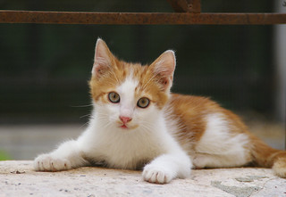 corfu cat | by sanderovski