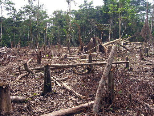 Slash and burn agriculture in the Amazon | by Matt-Zimmerman