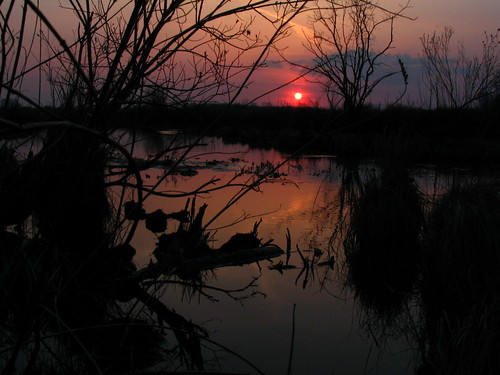 trees sunset sun water creek river kettlemorainesouth scuppernong excapture