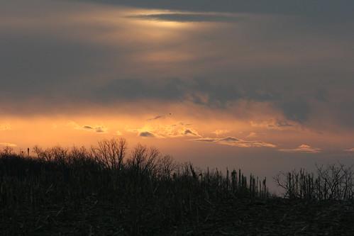 trees sunrise farm barns