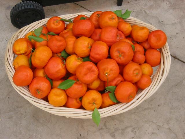 Tangerines!
