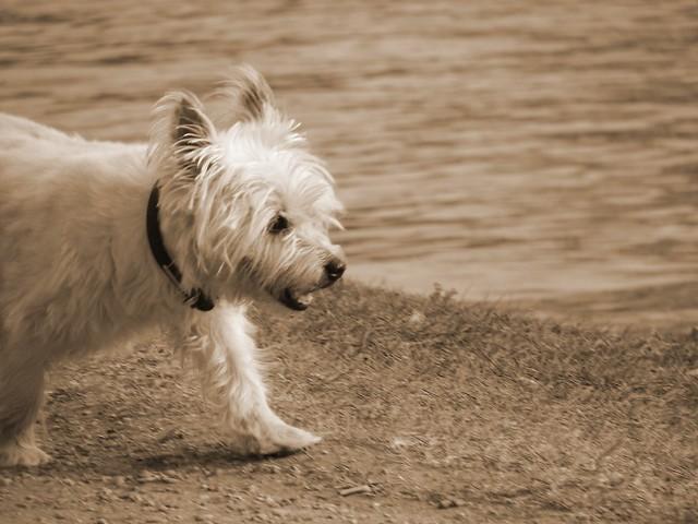 Lovely little doggy