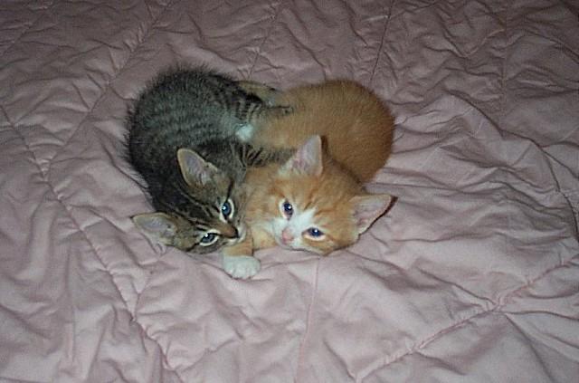 LOVE CAT BABIES!!