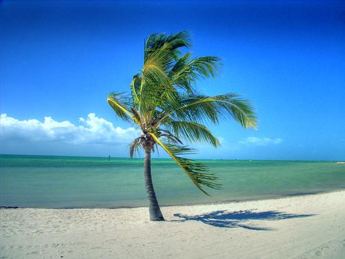 ocean usa tree beach water landscape geotagged gulf superb wind florida palmtree lonely keywest hdr masterpiece lonelytree waterscape naturesfinest blueribbonwinner smathersbeach flickrsbest superbmasterpiece diamondclassphotographer flickrdiamond superhearts