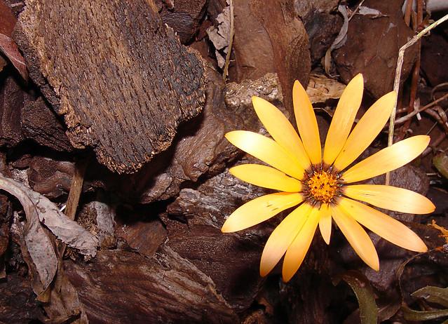 Pequeña flor / Little flower