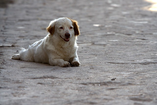 Dog in Copan | by Lauri Väin