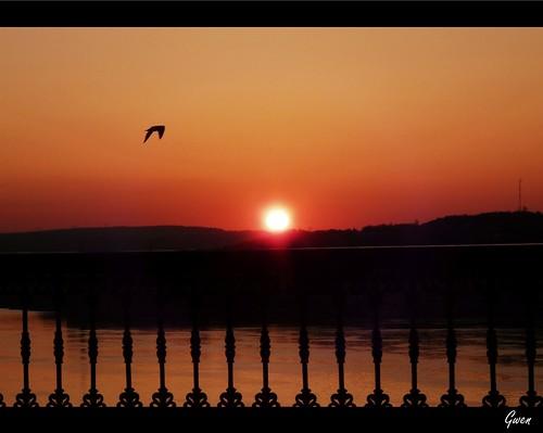canada bird sunrise québec gwen oiseau leverdesoleil fleuvestlaurent terrassedufferin vosplusbellesphotos