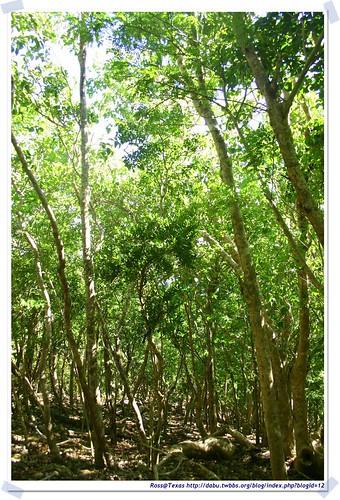 20041020_Guana@BVI_Grand Ghut Trail_002_A | by rosstsai