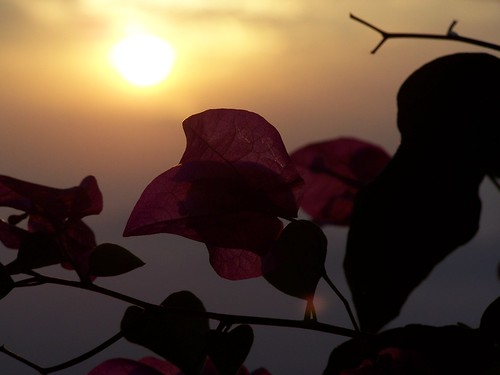africa flowers flower sunrise uganda kampala