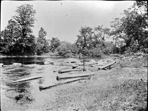 trees timber rivers 1900s