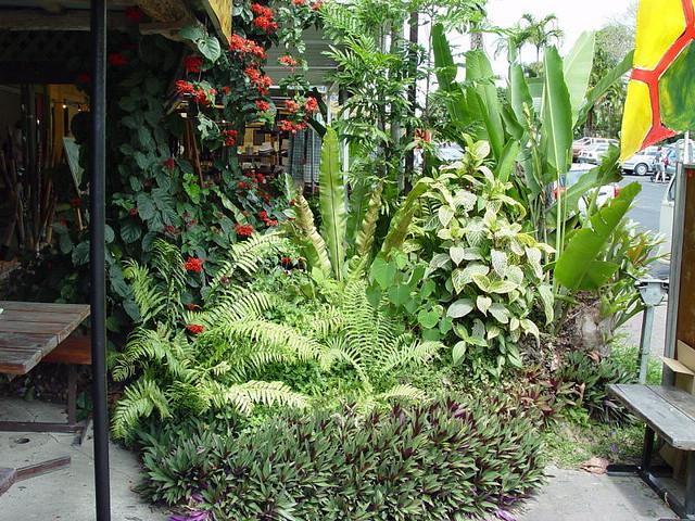 Tropical street landscaping, Kuranda, far-north Queensland ...