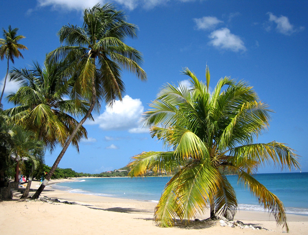 Vigie Beach and Palm Trees, St Lucia | Print can be ordered … | Flickr