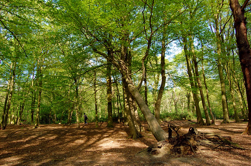 Highgate Woods   by Sifter