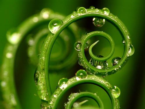 Spirals   by jciv